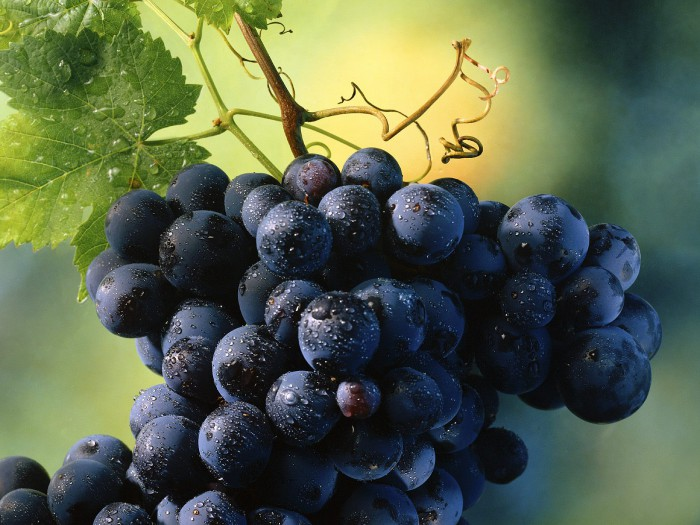 виноград фото -05
