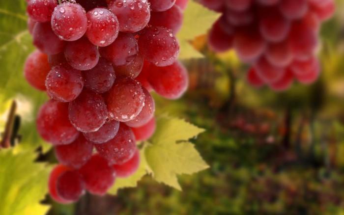 виноград фото -06