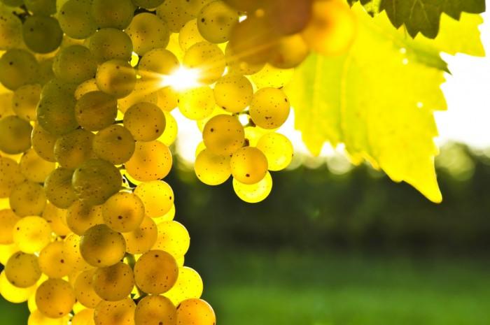виноград фото -07
