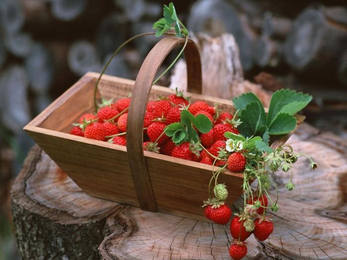 ягоды фото - 01