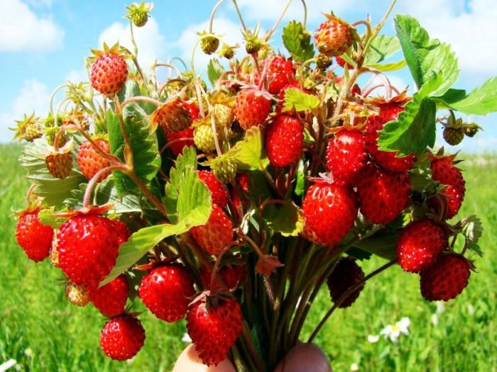ягоды фото - 06