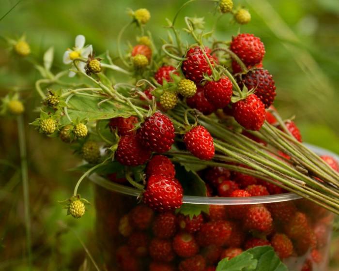 ягоды фото - 12