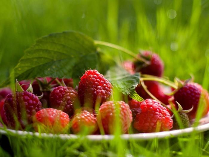 ягоды фото - 17